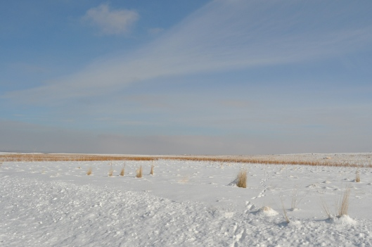 Antelope Island in Winter