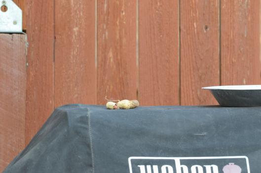 Awww,  nuts!