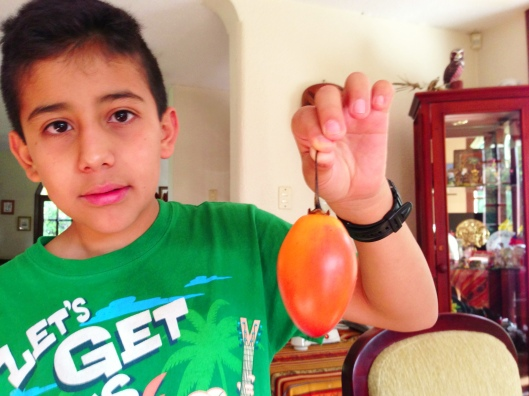 Juan-Andres holds up a tree tomato, also known as a Tamarillo
