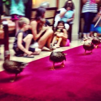 Peabody Ducks Orlando