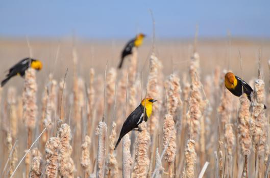 SL birding festiva